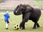 1273731319_animals-also-love-playing-football-super-funny